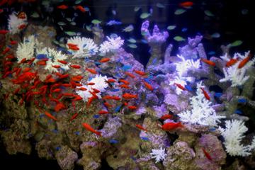 金魚と熱帯魚の共存。