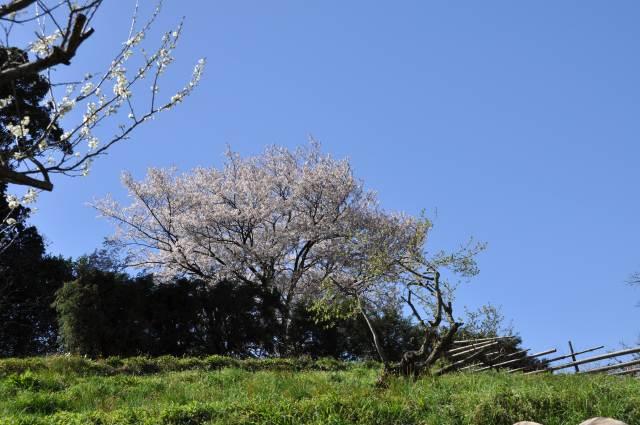 3-20-4_20090320081231.jpg