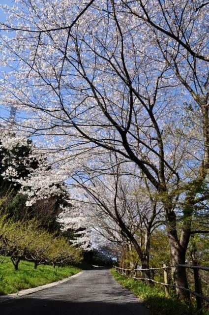 3-27-3_20090327075759.jpg