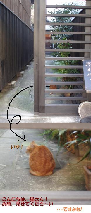 n猫さん1
