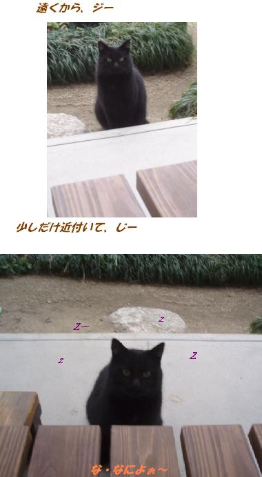 90117P1180506猫