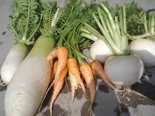 902P2070556野菜