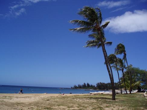 hawaiiP4130938n1.jpg
