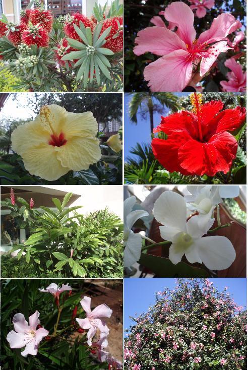 hawaiiP4141015hana.jpg