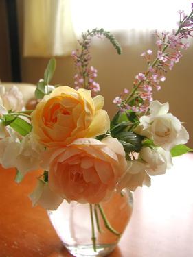 避難したバラたち