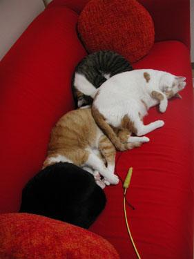 くるみ、花梨、菊之助、はっちゃん…ネコズ専用ソファーか?