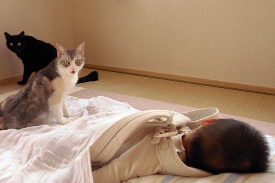 お昼寝中のおちびさんとネコズ