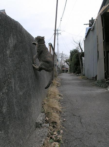 20080121_007