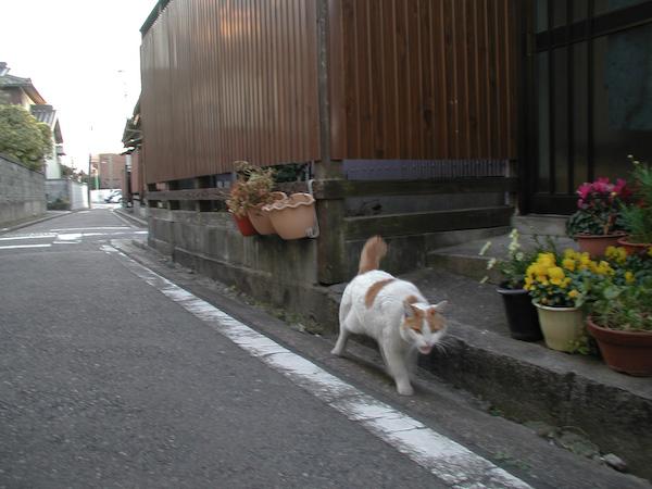 20080307_048