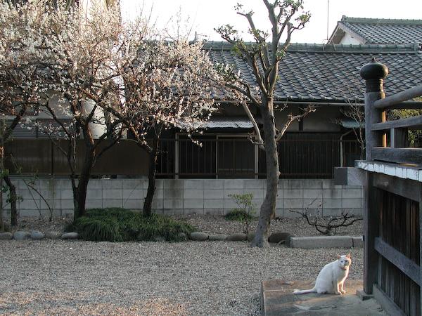 20080311_042