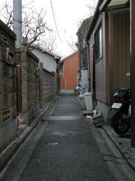 20080311_049