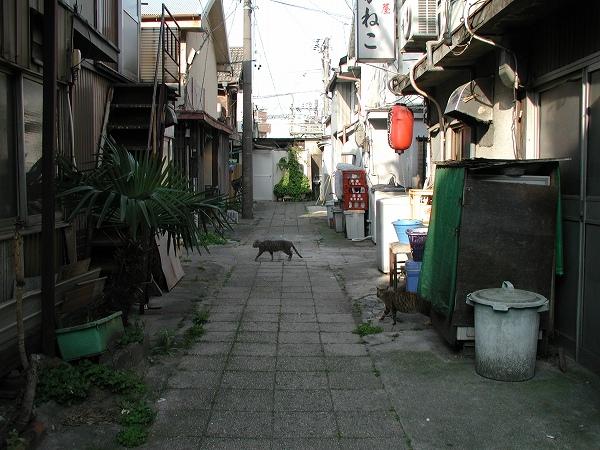 20080422_026