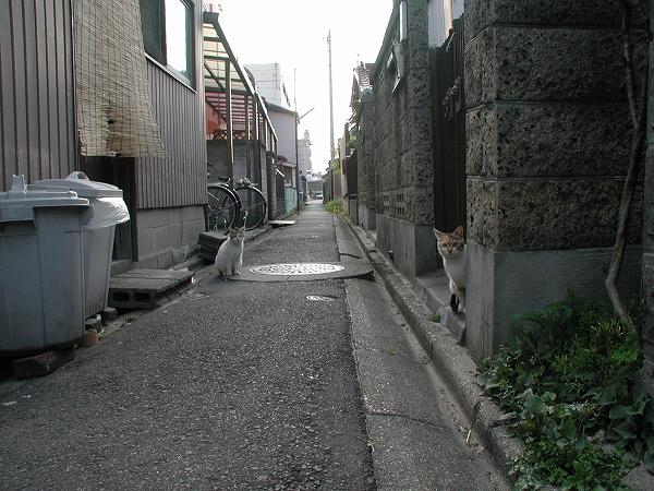 20080422_035
