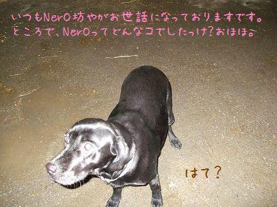 20080109173001.jpg