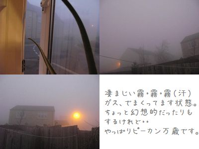 IMG_1255.jpg