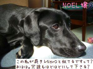 noel-1.jpg