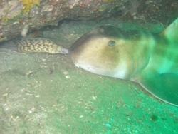 090511(竹漁礁)