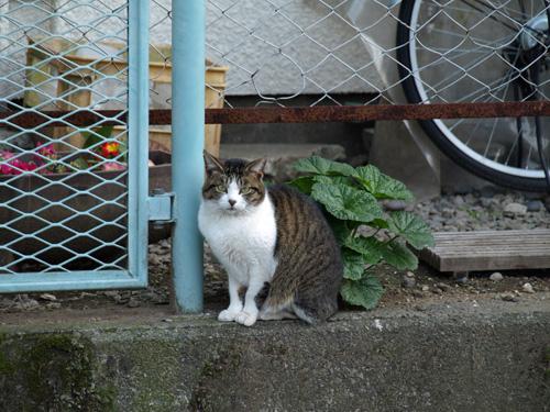 090330オマケ(美猫さん)