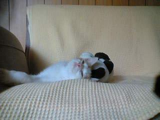枕のパンダさん
