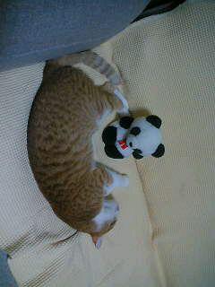 囲まれるパンダさん