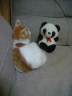 パンダさんと語らい