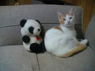 パンダさんと2ショット