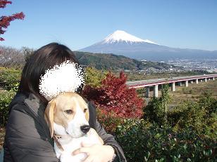富士さまとnico