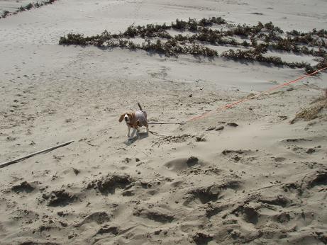 浜岡砂丘で遊ぶnico