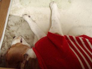 09.02.19ヒーターの番犬