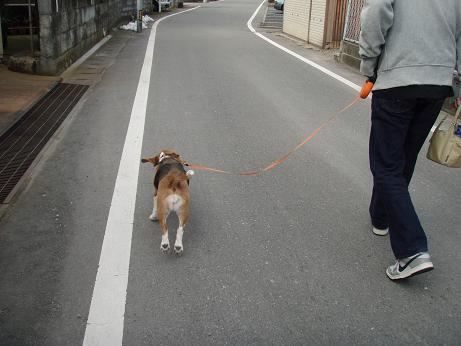 09.03.01さんぽ