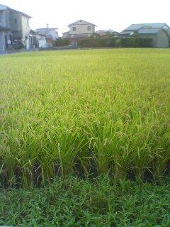 2008-09-08-2.jpg