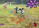 dog_run2_20090711033005.jpg
