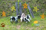dog_run_20090711033028.jpg