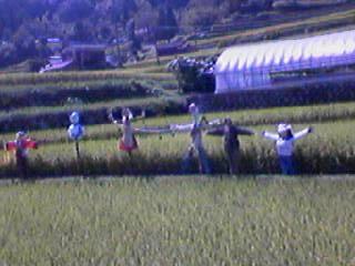 小畑の棚田 右から2番目が母の作