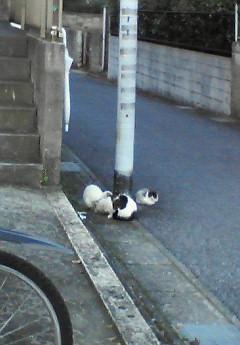 NEC_097711;1三匹の猫に遭遇
