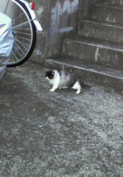 NEC_0980幻のふわ猫の横姿