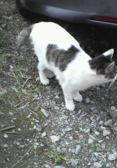 NEC_1234猫の中に猫がいた
