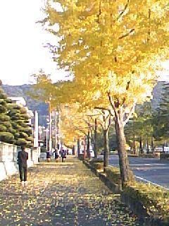 081125_0811~01銀杏並木