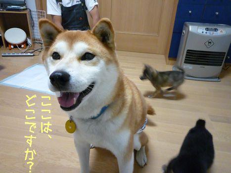 ぐーふー@大豆さん宅 笑顔♪笑顔?