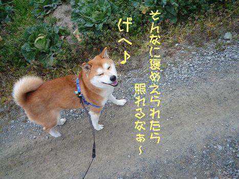 ぐーふー奥義・カメラめせ...んん??(汗)