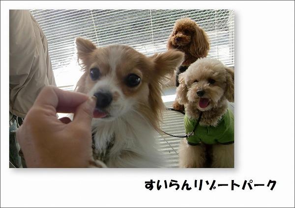 2009112301.jpg