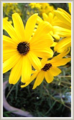 10.11 お花