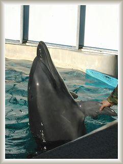 10.15江の島イルカと握手