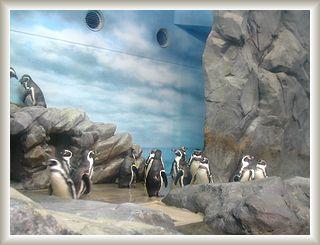 10.15江の島ペンギン