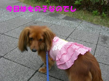 乙女きんちゃん