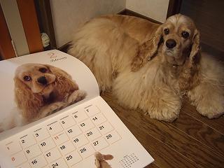 s-カレンダー