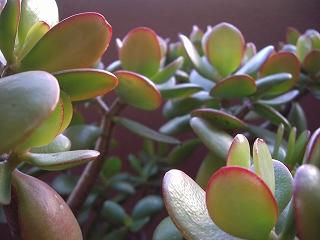 s-冬の植物