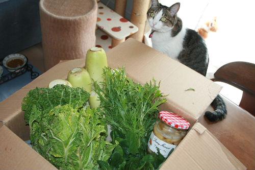 兄のお野菜