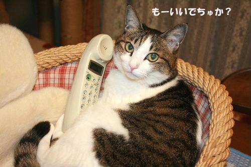 電話4のコピー