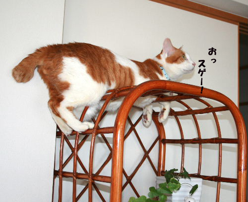 れお登頂3